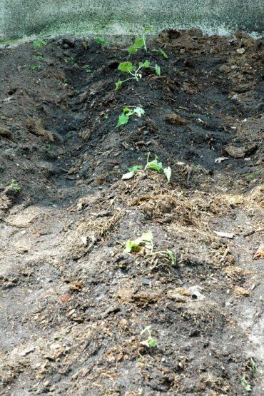 vegetable garden progress