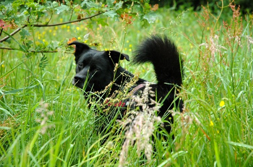 Fritzi in the grass