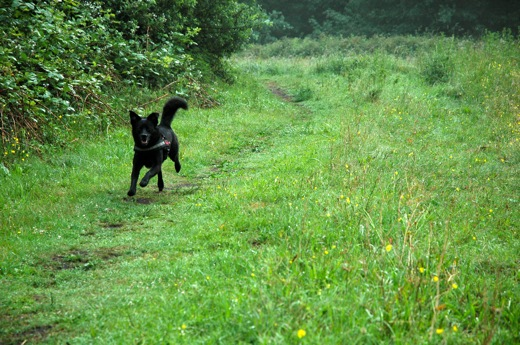 Fritzi running around