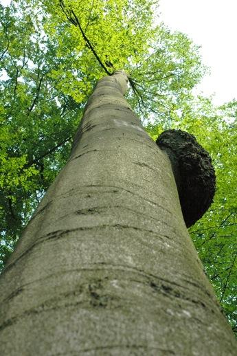 A beautiful tall tree