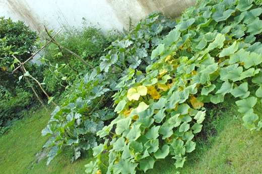 My vegetable garden