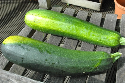 "Homegrown ""Monster Zucchinis"""