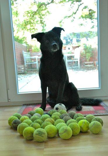 love for tennis balls