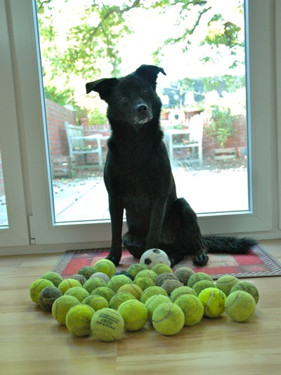 Fritzi and his collection of balls
