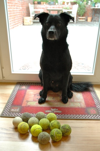 Back in July this was the beginning of his ball collection