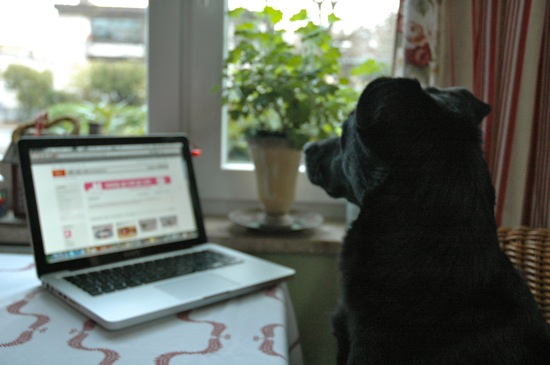Fritzi doing some Etsy Shopping ; )