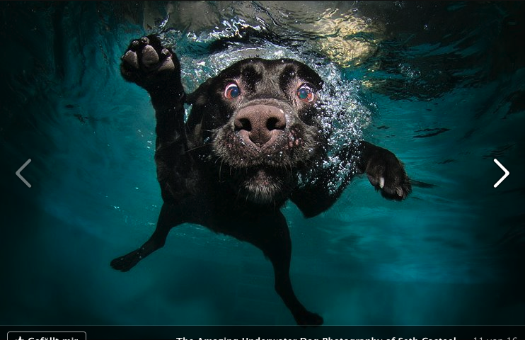 Underwater dog (Via: www.littlefriendsphoto.com)