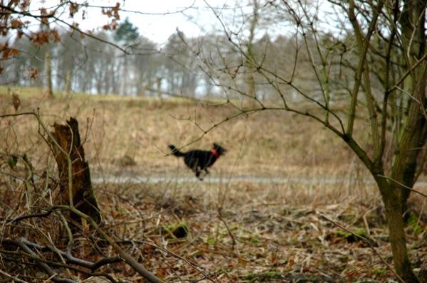 Run Fritzi, run!