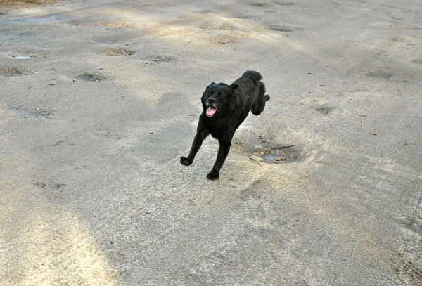 Happy dog running!