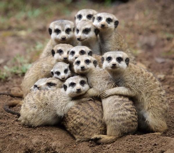Group hug (Via: http://pinterest.com/pin/79798224617331446/)