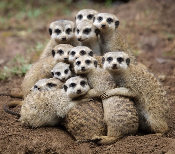 Group hug (Via: http://pinterest.com/pin/79798224617331446/)