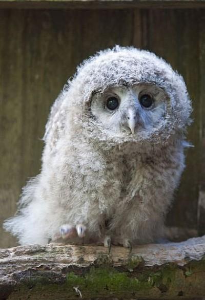 owl baby via http://pinterest.com/pin/282108364128364843/