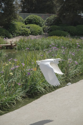 A bird at the japanese garden