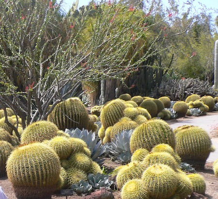 """Desert Garden"" at Huntington Gardens"