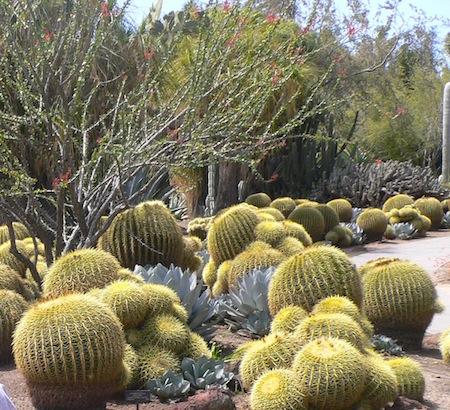 """""""Desert Garden"""" at Huntington Gardens"""