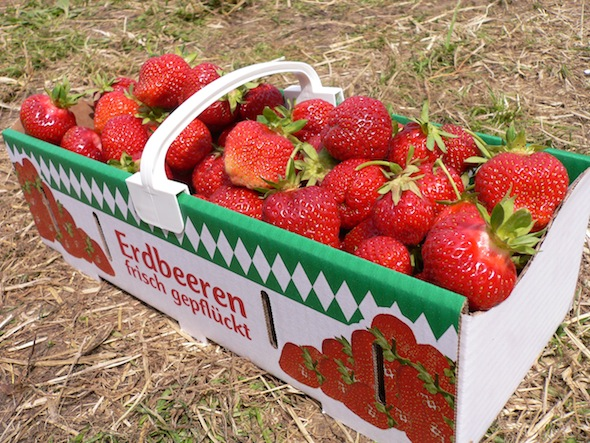 Organic, sweet strawberries... the best!