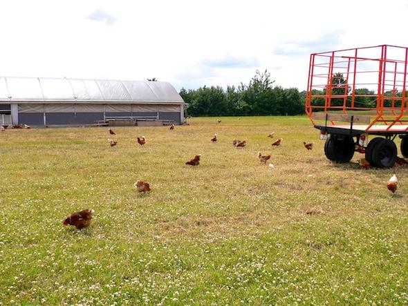 Next to us were the chicken