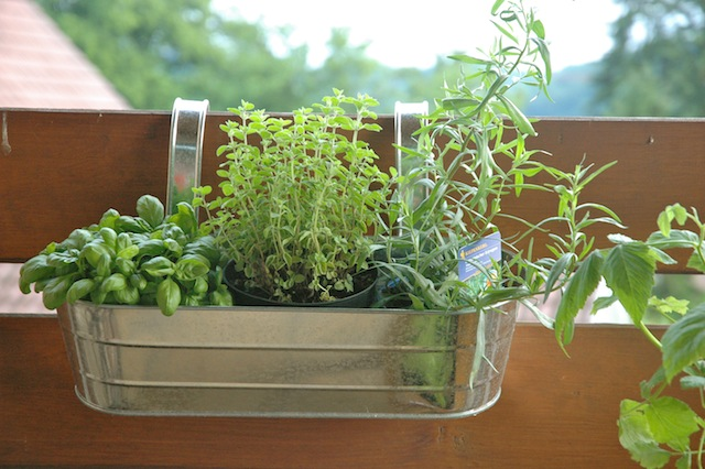 Greenderella welcome to our balcony garden for Balcony herb garden designs containers