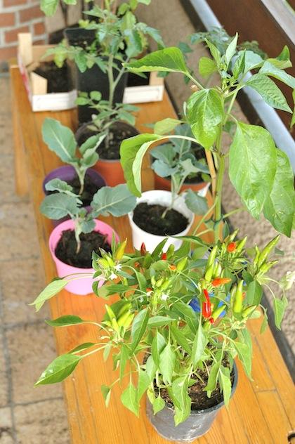 Chili, tomato, broccoli and red pepper