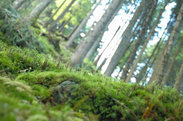 We took a walk in a beautiful moss covert forest