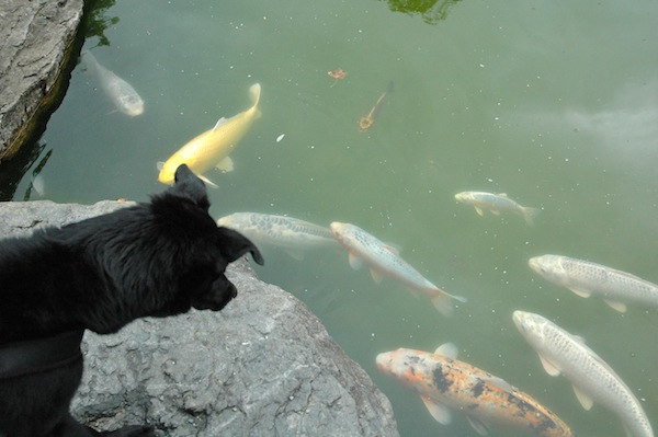 For the first time, Fritzi saw fish and he was totally fascinated