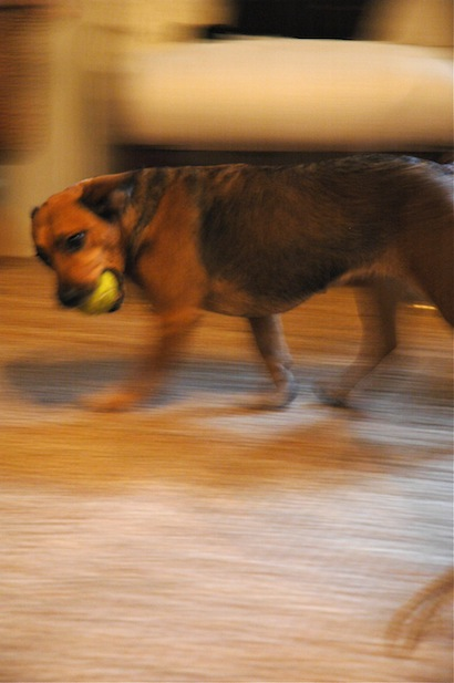 Jule playing with her favorite ball