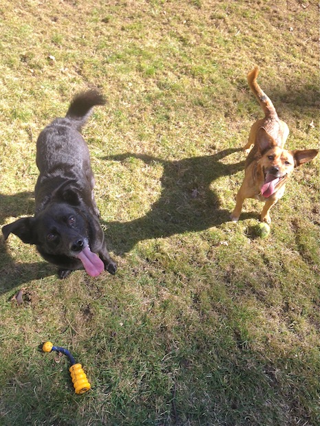 My cutie pies Fritzi & Jule