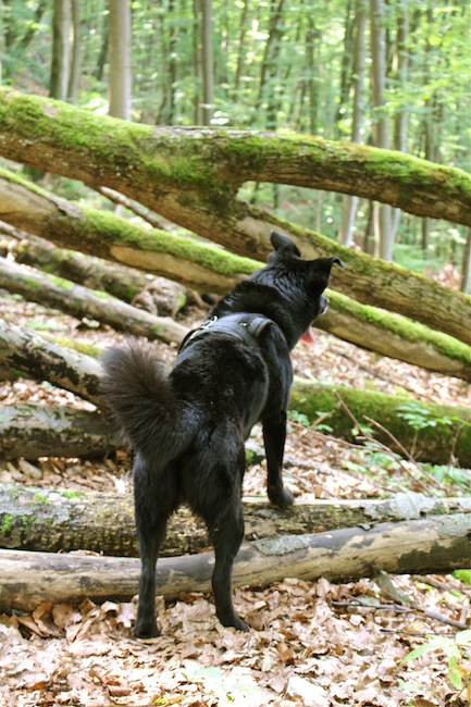 Fritzi on an adventurous forest trail