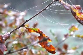 Morning Walk In Fall
