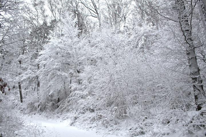 Snowy forest in Switzerland