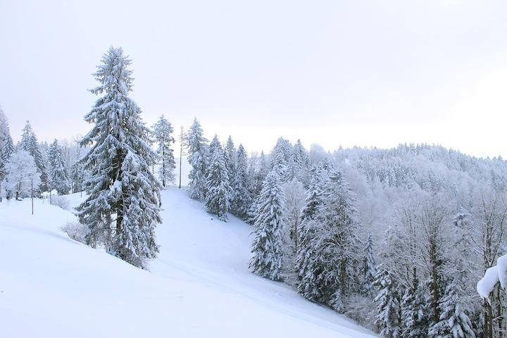 Winter Wanderung Zuger Berg