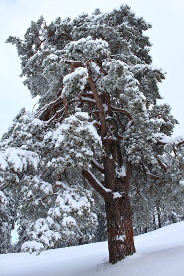 zuger berg winter