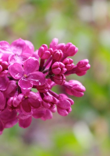 The beauty of lilac & some thoughts on turning 30