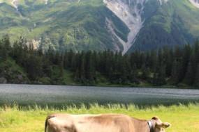 Beautiful Swiss Mountain Village