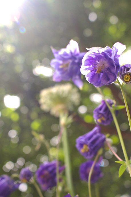 bokeh flower
